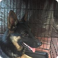 Adopt A Pet :: CZAR-17 - Lithia, FL