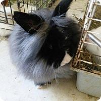 Adopt A Pet :: Trixie - Palm Coast, FL
