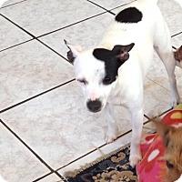Adopt A Pet :: Trixie - Shannon, GA