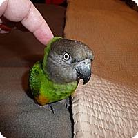 Adopt A Pet :: Baby - Tampa, FL