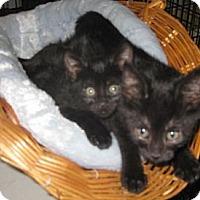 Adopt A Pet :: Mystic & Mayhem - Dallas, TX