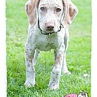 Adopt A Pet :: Teagen - Haverhill, MA