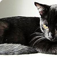 Adopt A Pet :: Diego - Alexandria, VA