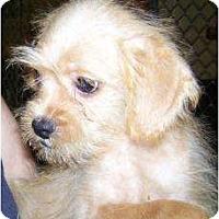 Adopt A Pet :: Drake - Antioch, IL