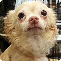 Adopt A Pet :: Emmy - Orlando, FL