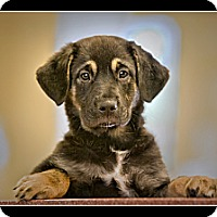 Adopt A Pet :: Ariel - Wickenburg, AZ