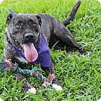 Adopt A Pet :: Bianca K91-7436 - Thibodaux, LA