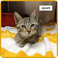Adopt A Pet :: Sport - Miami, FL