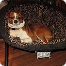 Adopt A Pet :: Sefton