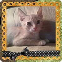 Adopt A Pet :: Hash Brown - Mount Laurel, NJ