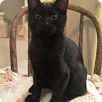 Adopt A Pet :: Kimi - Edmond, OK