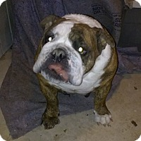 Adopt A Pet :: Vicky - Weatherford, TX