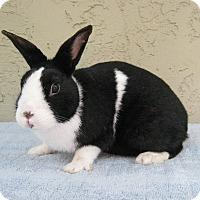 Adopt A Pet :: Abner - Bonita, CA