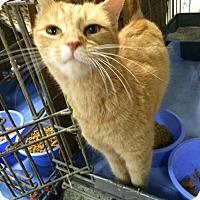 Adopt A Pet :: Mai Li - Trevose, PA