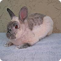 Adopt A Pet :: Vince - Bonita, CA