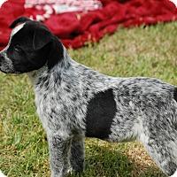 Adopt A Pet :: Skye - Manning, SC