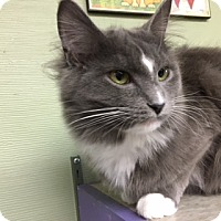 Adopt A Pet :: Agnetha - Medina, OH