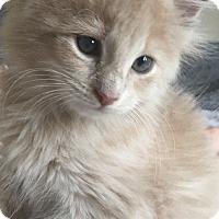 Adopt A Pet :: Blondie & Dagwood *! PAIR ONLY - Mount Laurel, NJ