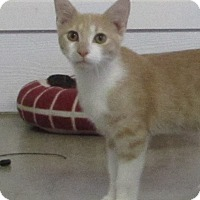 Adopt A Pet :: BUTTERS - Jackson, MO
