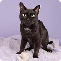 Adopt A Pet :: Black Beauty - Wilmington, DE