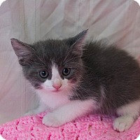 Adopt A Pet :: Jewels - Muskegon, MI