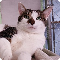 Adopt A Pet :: Mikey - Freeport, NY