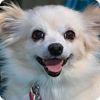 Adopt A Pet :: Jewel - Fountain Valley, CA