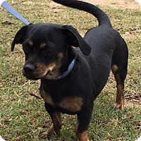 Adopt A Pet :: Stacey - Marble Falls, TX