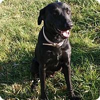 Adopt A Pet :: Sarah - Trenton, MO