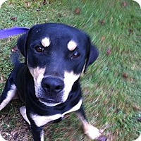Rottweiler Mix Dog for adoption in Vidor, Texas - Max