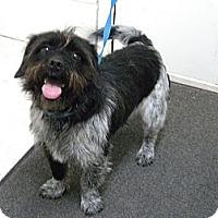 Adopt A Pet :: Baxter - Lancaster, VA