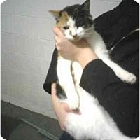 Adopt A Pet :: Calico - Alliance, OH
