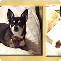 Adopt A Pet :: Tang - Scottsdale, AZ