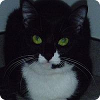 Adopt A Pet :: Cassie - Hamburg, NY