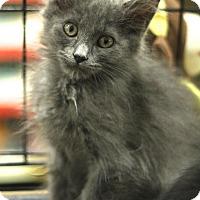 Adopt A Pet :: Claudia - Sacramento, CA