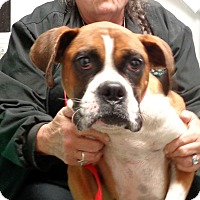 Adopt A Pet :: Gardenia - baltimore, MD