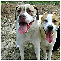 Adopt A Pet :: Hercules & Thor - Forked River, NJ