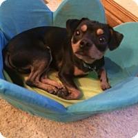 Adopt A Pet :: Lucky meet me 8/21 - East Hartford, CT