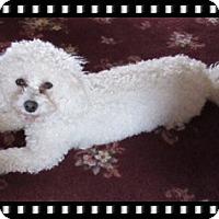 Adopt A Pet :: Adopted!!Bijou - MN - Tulsa, OK
