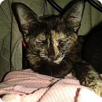 Adopt A Pet :: Chimera - Tustin, CA