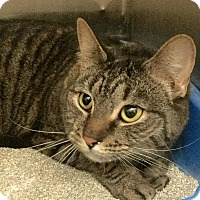 Adopt A Pet :: Pearl - Webster, MA
