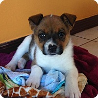 Adopt A Pet :: Chunk - Royal Palm Beach, FL