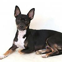 Adopt A Pet :: Buddy - Needs Foster - Bloomington, MN