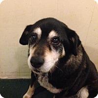 Adopt A Pet :: Maggie (CL) - Greensboro, NC