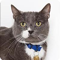 Adopt A Pet :: Georgie - San Luis Obispo, CA