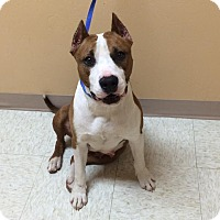 Adopt A Pet :: Diamond - Woodward, OK