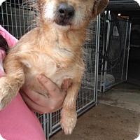 Adopt A Pet :: Hansel - Foristell, MO