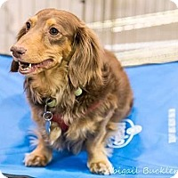 Adopt A Pet :: Buster - Henderson, NV