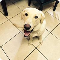 Adopt A Pet :: Cooper (See Video) - Munford, TN