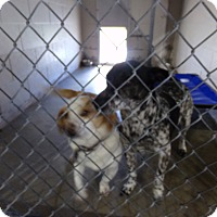 Adopt A Pet :: Sugar and Spot - Osceola, AR